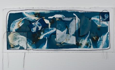 Katz.cyanotype.23